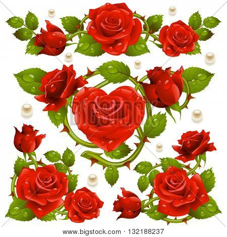 Vector Red Rose design elements isolated on white background