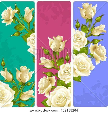 White Rose frames. Vector set of floral vertical banners