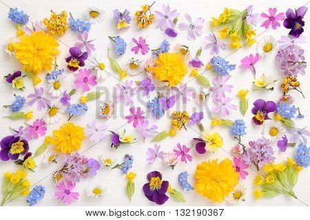 Beautiful colorful spring flowers on a white background.