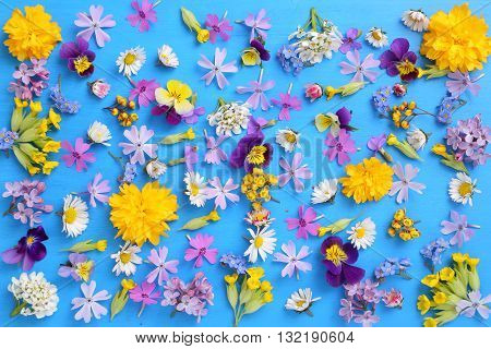 Beautiful colorful spring flowers on a blue background.