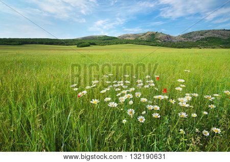Beautiful green spring meadow landscape. Composition of nature.