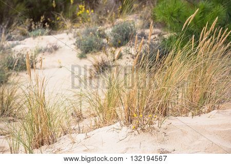 Sand Dunes At The Ocean Beach In France