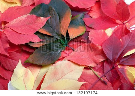 Background Of Multicolor Leafs