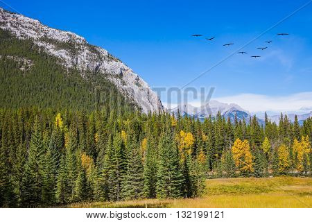 Mountain valley in Banff National Park. Canada, Rocky Mountains. Flock of migratory birds in the blue sky