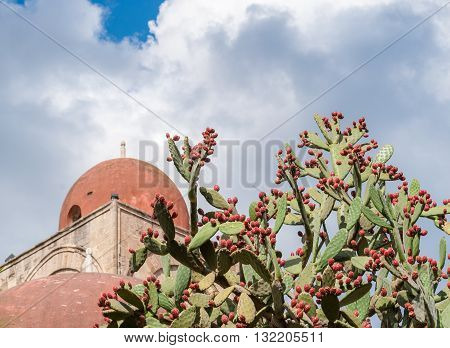 Prickly pears plant with fruits; red dome of a church in background (Palermo Sicily)