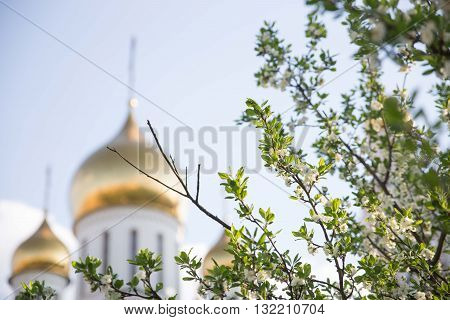 Branch of apple tree and Ortodox Church on background