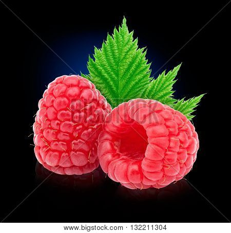 Two ripe raspberries with leaf isolated on blue to black background with clipping path and reflections