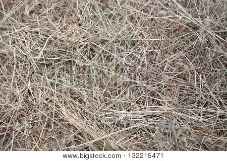 dry hay grass yellow dry background nature