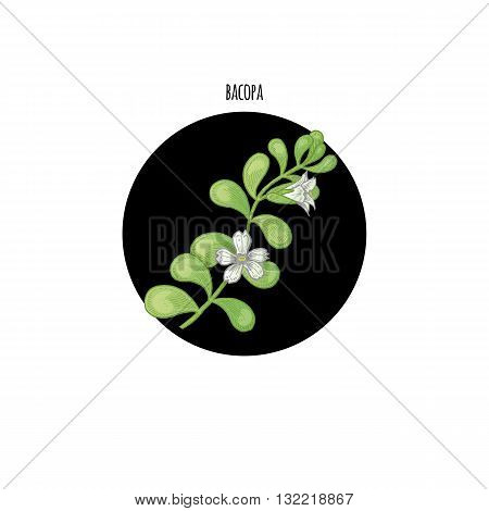 Vector color plant Bacopa in black circle on white background. Concept of graphic image of medical plants herbs flowers fruits roots. Design for package of health beauty natural products.