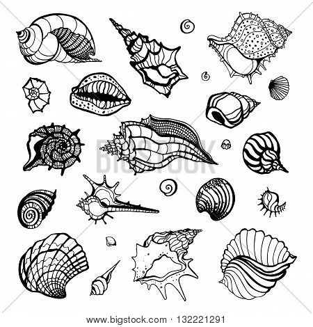Sea shell collection isolated on white background. Hand drawn Vector shells for your design.