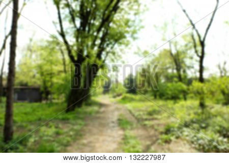 Footpath in a green park