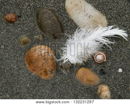 Beach Treasures, rocks, sand, snail shell, white feather