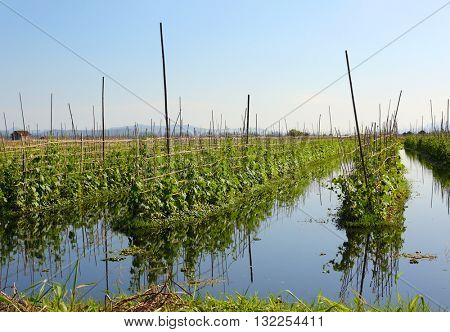 Floating gardens on Inle Lake, Myanmar (Burma)