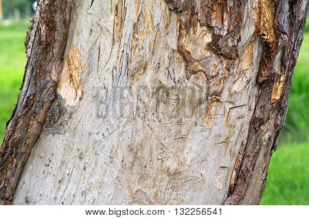 Cracked wood natural texture on sunshine. Outdoor photo