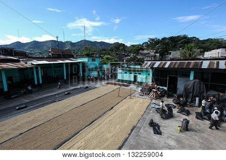 TINGO MARIA PERU - JUNE 22: The drying of coffee beans in courtyard of Naranjillo cooperative in Tingo Maria Peru 2011
