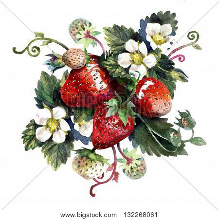 Strawberries isolated on white. Watercolor painting wiht red berries