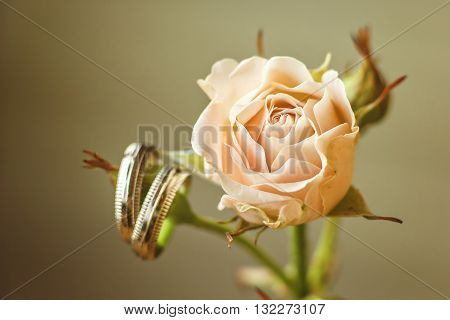 Wedding concept - wedding rings and rose. Wedding card with place for your text. Wedding symbols, attributes. Holiday, celebration. Macro. Blur
