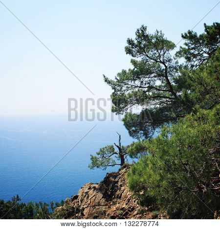 View of Mediterranean Sea from Cape Gelidonya. Pine trees on the southern coast of Turkey. Calm blue sea and clear sky. Spring sunny day in Antalya province, Turkey. Landscape with copy space area.