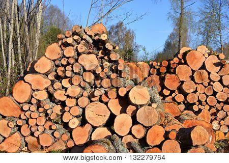 alder firewood log stack in early spring