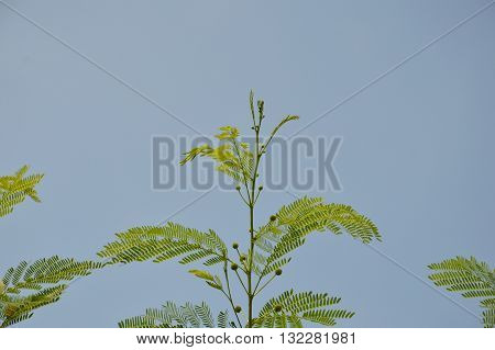 treetop of vegetable Humming bird on sky background