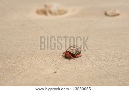 hermit crab on sand sea beach in tropical summer time at andaman