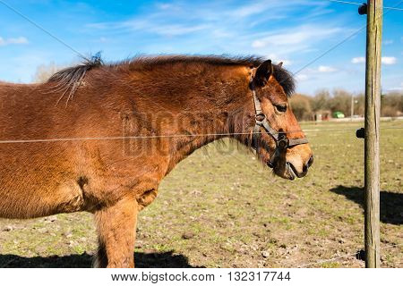 Small brown pony standing in enclosure at farm on sunny day.