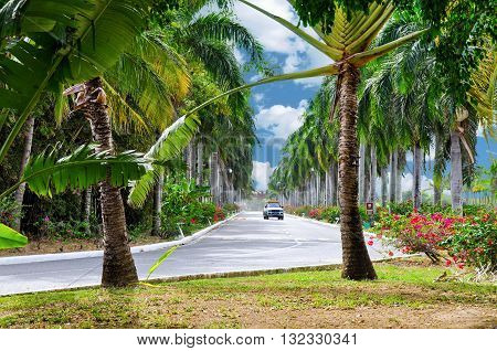 The picturesque paved road in Punta Cana Dominican Republic