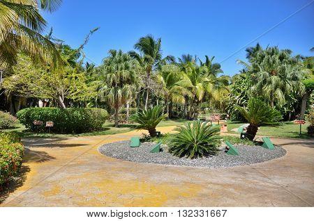 Punta Cana Dominican Republic - March 20 2010: Territory of Hotel Catalonia Royal Bavaro in Punta Cana palm trees