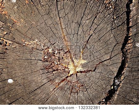 Texture Of Old Annual Ring, Growth Rings