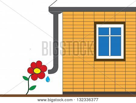 Flower and drain pipe home. watering and growing flowers