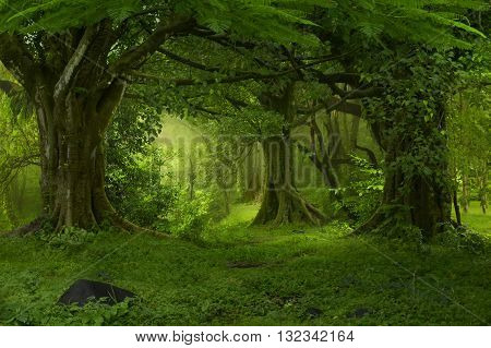 tropical rainforest of Southeast Asia early in the morning