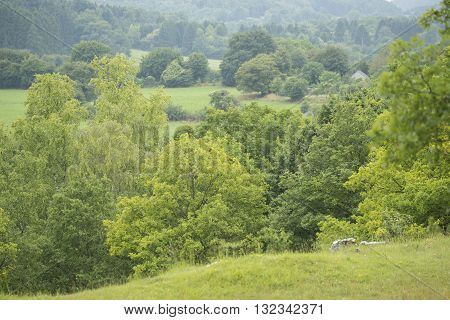 Overview of Trees in a Hill Country in Nismes a small village in Viroinval Namen Belgium