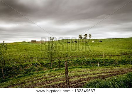 cloudy landscape of cow pasture Quebec Canada