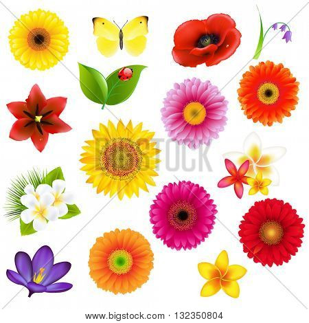 Colorful Big Flowers AndLeaf Set, With Gradient Mesh, Vector Illustration
