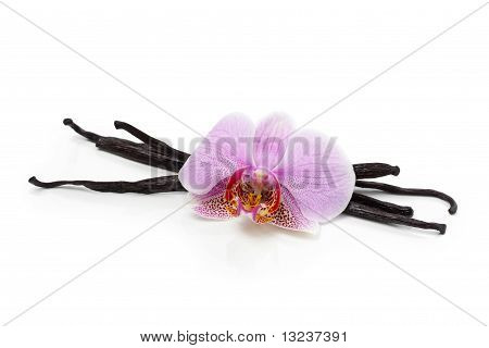 Vanilla Beans And Orchid Flower