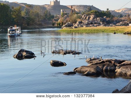 Beautiful river Nile at Aswan Egypt with Birds