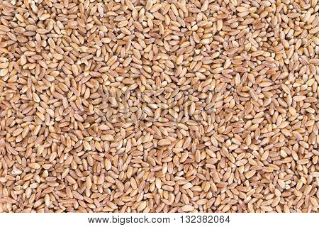 Background Texture Of Pearled Farro Wheat