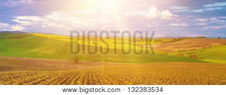 Rapeseed yellow sunny fields in spring with blue sky and green hills,  natural eco seasonal  background, panorama