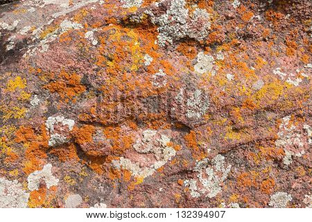 Lichen on the rocks in Colorado Springs Colorado