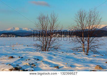 Lonely tree on the island Lohmaty. Beautiful winter landscape in the Lake Baikal.