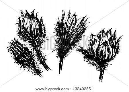 drawing set beautiful flowers snowdrop, sleep-grass sketch hand-drawn graphic ink isolated vector illustration