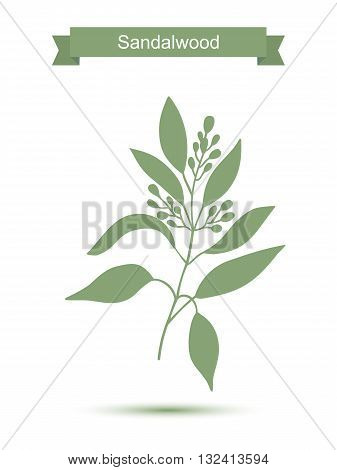 Sandalwood tree branch with flowers silhouette.Vector illustration isolated on white