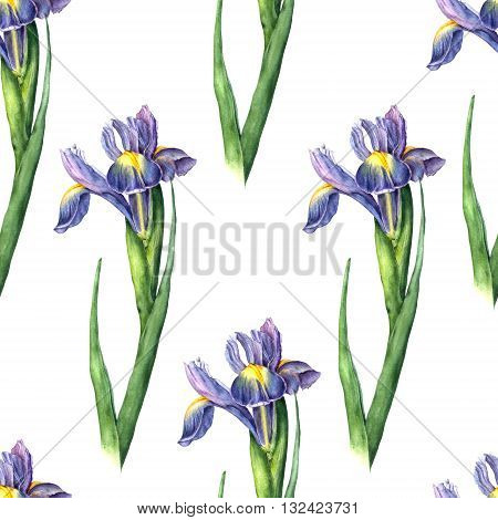 Watercolor iris on white background. Hand drawn seamless pattern