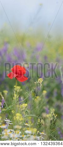 colorful flowers on field in summer sunset