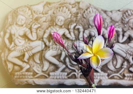 Beautiful Flower Plumeria Or Frangipani In Asia  Boutique Style Background, Harmony Flowers Backgrou