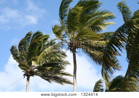 Palm Trees Against A Clouded Blue Sky