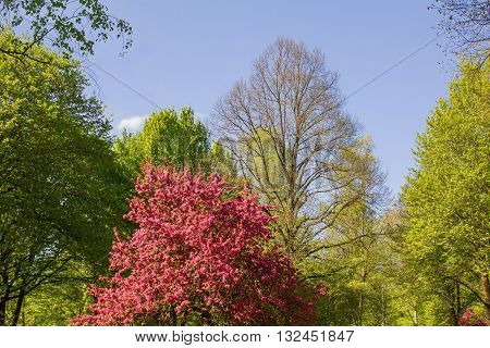 Park Landscape At Springtime