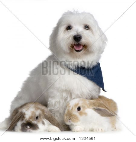 Dog And Lop Rabbits
