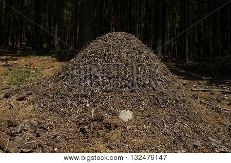 Wood Ant nest in central Europe forest
