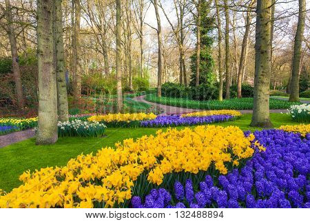 Landscape With Beautiful Blooming Flowers In Famous Keukenhof Park